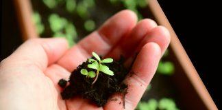 Zaprovadzhennya Derzhpidtrymky Organichnogo Vyrobnytstva Ye Stymulom Dlya Investytsij U Galuz Vysotskyj