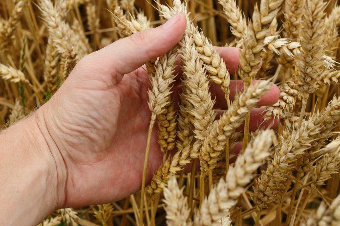 Menedzher Fermy Veterynar Ta Agronom Najbilsh Zatrebuvani Vakansiyi V Agrosektori