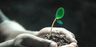 Agrovyrobnyky Zaklykayut Radu Pryjnyaty Zakonoproekt Pro Rozblokuvannya Importu Innovatsijnyh Zzr