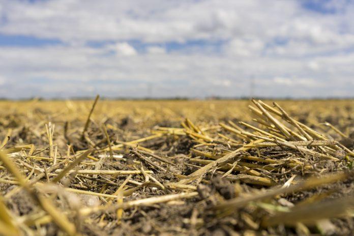 Na Vsij Terytoriyi Ukrayiny Klimat Peretvoryuyetsya V Pivdennyj Adamenko